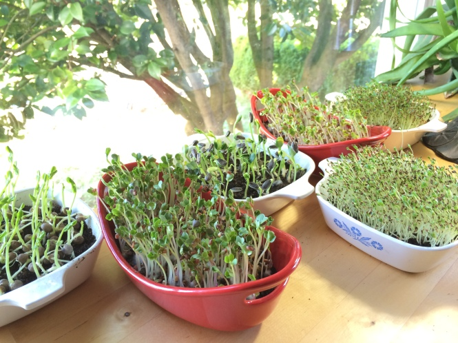 Sprouting is Fun and Easy!!!